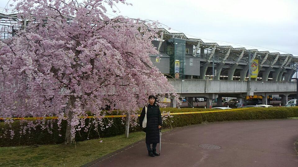ユアスタの桜